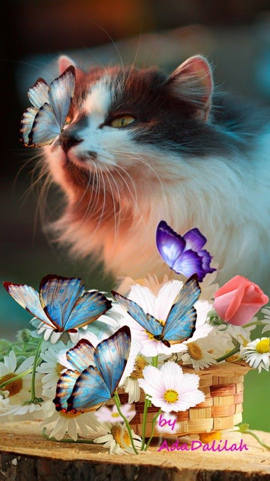 Pin By Ada Dalilah On My Montages In Cute Cats Cats Kittens