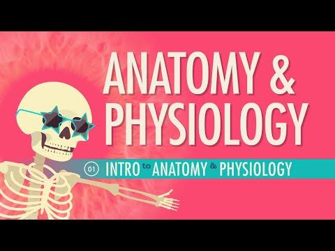 Introduction to Anatomy & Physiology: Crash Course A&P №1 In this episode of Crash Course, Hank introduces you to the complex history and terminology of Anatomy & Physiology. By: Crash Course. Support on Subbable: http://subbable.com/crashcourse