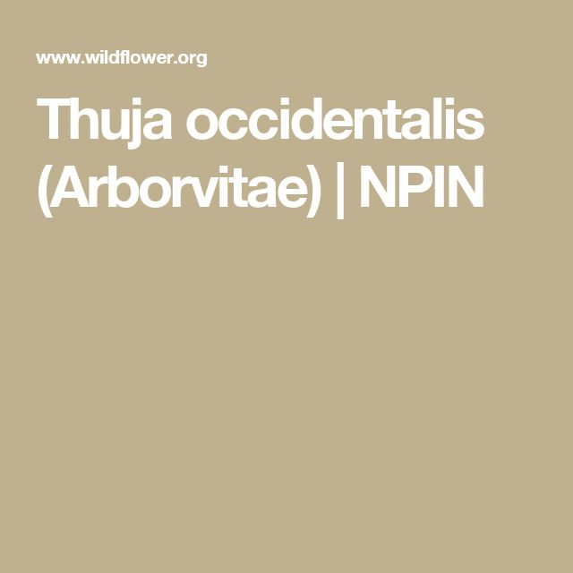 Thuja occidentalis (Arborvitae) | NPIN