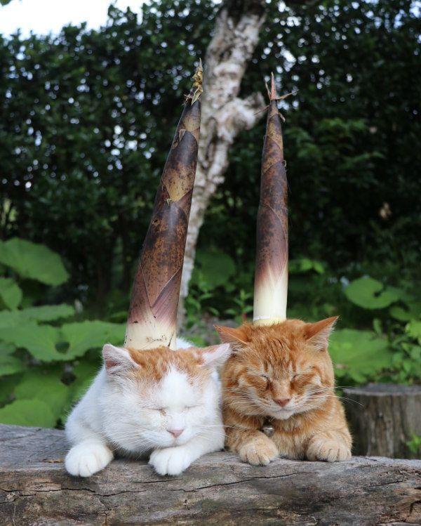可愛すぎる動物 猫 子猫 動物 ペット