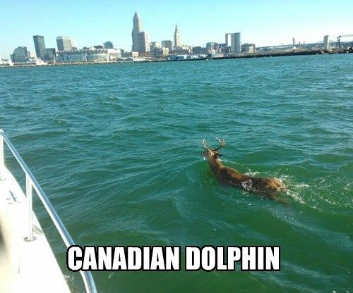 Just in from canada heading to cleveland