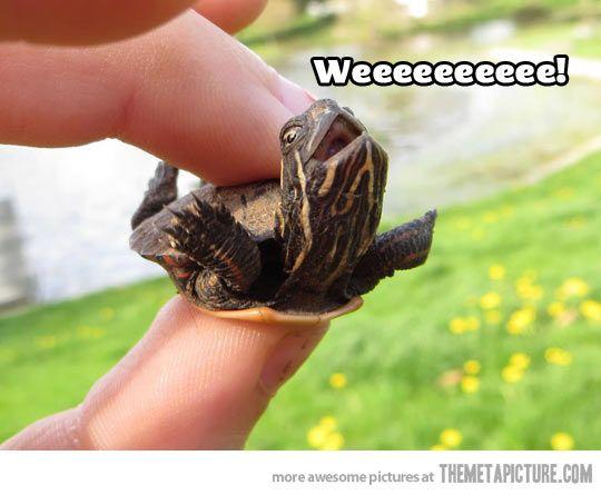 Happy baby turtle is happy…