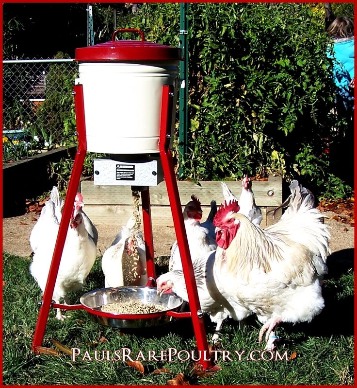 A Custom made Auto-Feeder, Sets Multiple times to feed and Quantity. Saves on feed expenses and rodent infestation. I cut my feed bill by 40%.  Cost is $395.00
