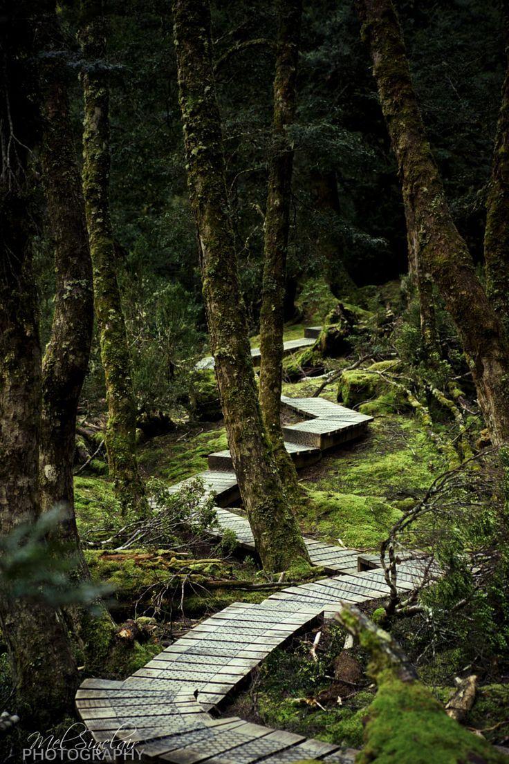 Rainforest walk at Cradle Mountain, Tasmania, Australia by Mel Sinclair on 500px