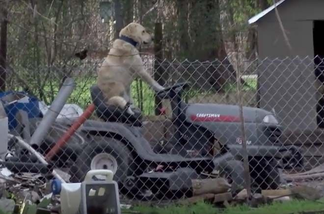 Dog Sitting On Lawn Mower http://viralselect.com/dog-sitting-lawn-mower/  #Dog #LawnMower #Mower #ViralVideo