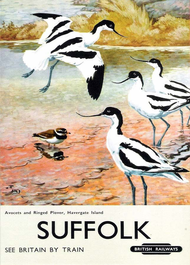 """""""Suffolk,  Avocets and Ringed Plover, Havergate Island"""" A British Railways holiday poster from the National Railway Museum collection"""