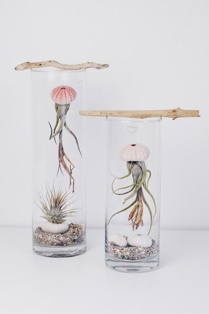ZimtZebra: Jellyfish- Dekoration und Tillandsien (Airplant) Pflege (Diy Bathroom)