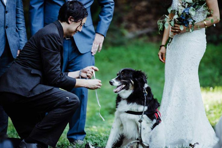 When David Michel's wedding day approached, he wanted to do something special to surprise his animal-loving bride, Jenny. It involved a dog.  Michel asked his friend, Tod Emko, if his three-legged rescue dog, Piggy, could come to the wedding — and play a very important role.  Be sure to read the rest of the story!  This wedding took place at the SM&NC in summer 2017.