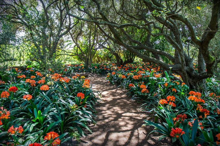 Lovely flowers along the pathway found in the gardens of Babylonstoren.
