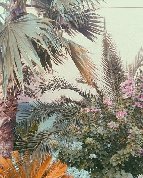 Tropical plants and pastel wallpaper inspiration.