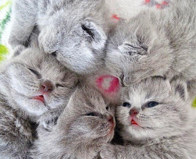 circle of kittens