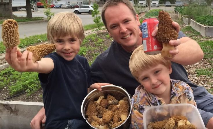 How To Video: How to Grow Morel Mushrooms in Your Own Backyard