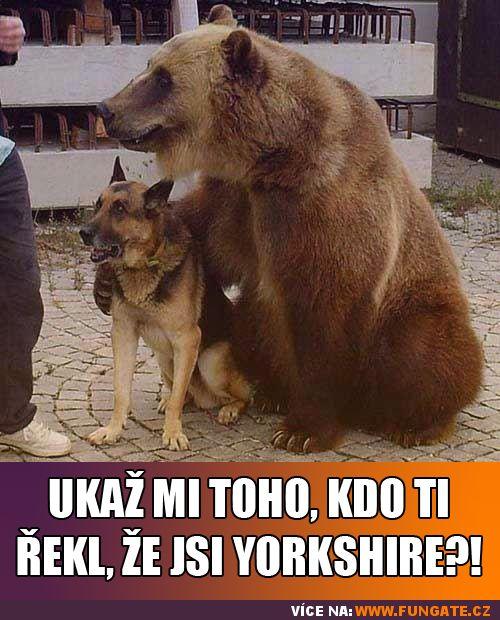 Ukaž mi toho, kdo ti řekl, že jsi Yorkshire?!