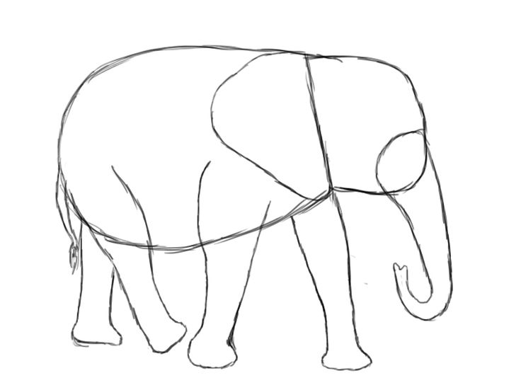 173 Best Drawing Elephants Images On Pinterest Elephants Baby