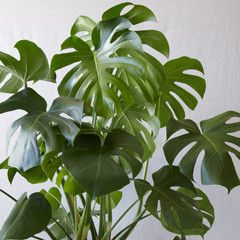 Top plant picks for apartments