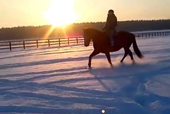 Projekt: Skok po sukces w zawodach! - Wspieram.to #kon #horse #zima #snieg