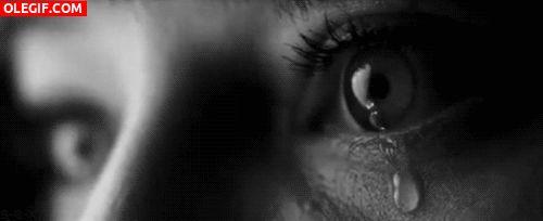 #wattpad #novela-juvenil Secuela de Mi estúpido Niñero  -.-.-.-.-.- ¿Recuerdan a Tyler?   Bueno, el paso de ser mi estúpido niñero a ser mi estúpido novio.   Como notaran lo estúpido sigue intacto, lo único que cambio fue nuestra relación.   La cual, diablos, es demasiado difícil mantener teniendo en cuenta que  los fantas...