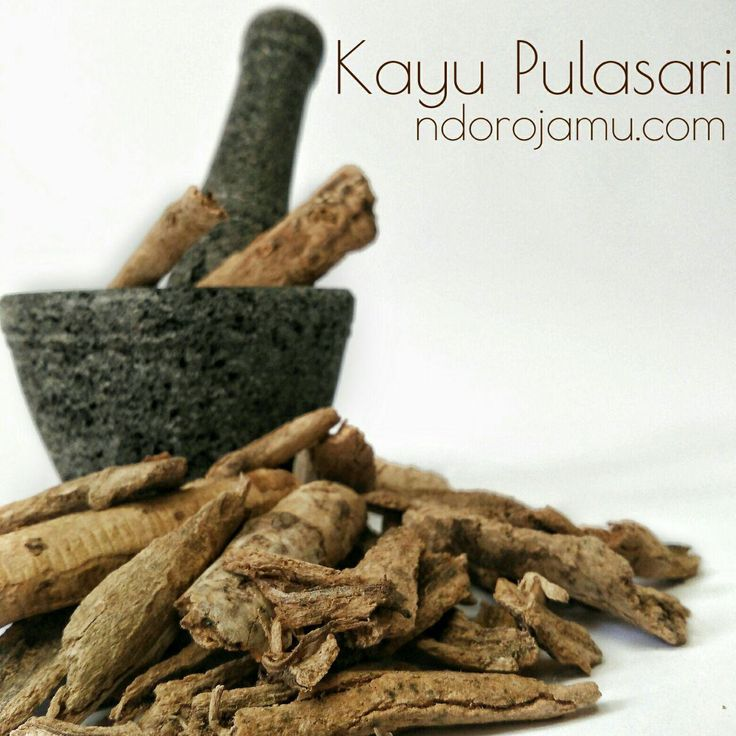 Pulasari Herbal Kering