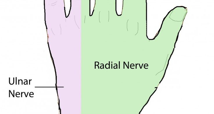 an overview of the anatomy of the hand Anatomy and physiology of the spinal cord a guide for patients  arc in your spinal cord and the hand is immediately pulled away your brain is aware of this event.