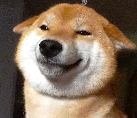 shiba-inu-smiles