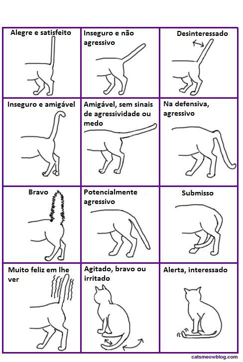 A cauda do gato é uma bandeira de sinalização: interprete                                                                                                                                                      Mais