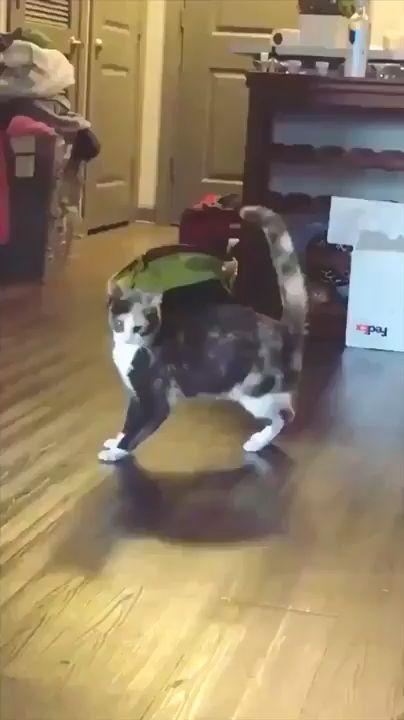 He do a danger dance