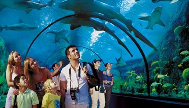 Loro Parque, Tenerife - Wildlife documentaries have their place but there's no substitute for the real thing: Loro Parque in Puerto de la Cruz will give you just that!...
