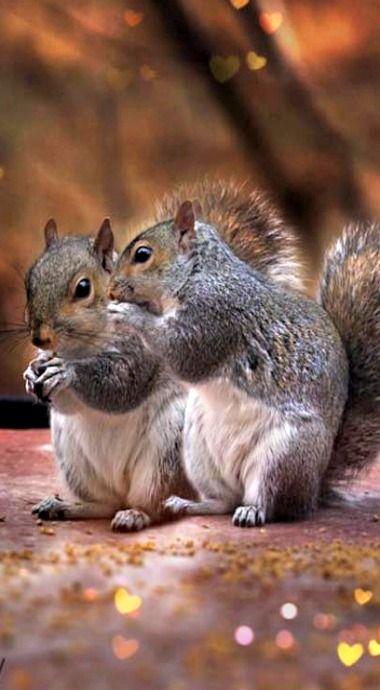 Sharing gossip ❊                                                                                                                                                     More