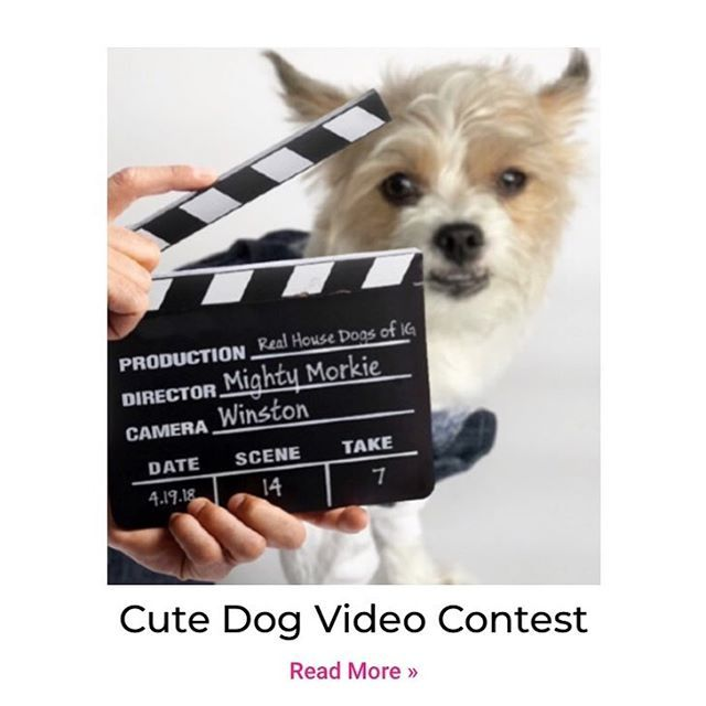 We Are Hosting A Video Contest For Details And Submissions Click