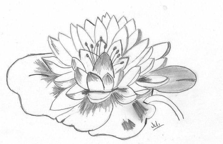 Dibujos de flores de loto a lapiz  Imagui