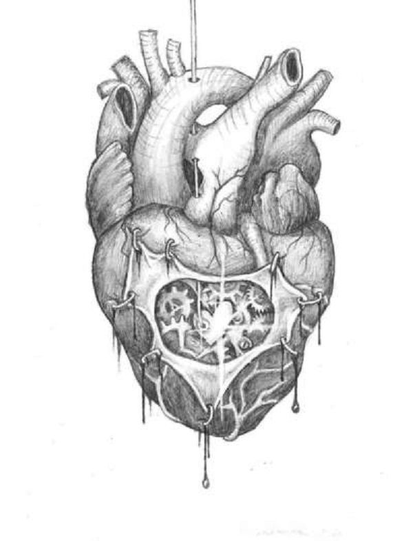 sketch of human heart – lickclick, Muscles