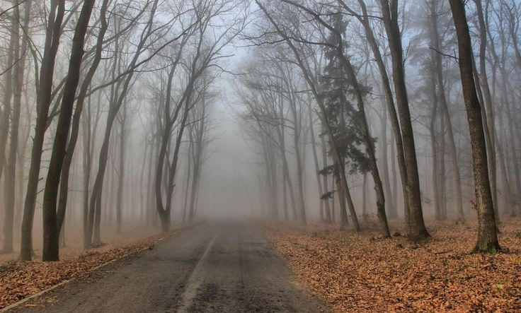 The road through the fog by Comsa Bogdan