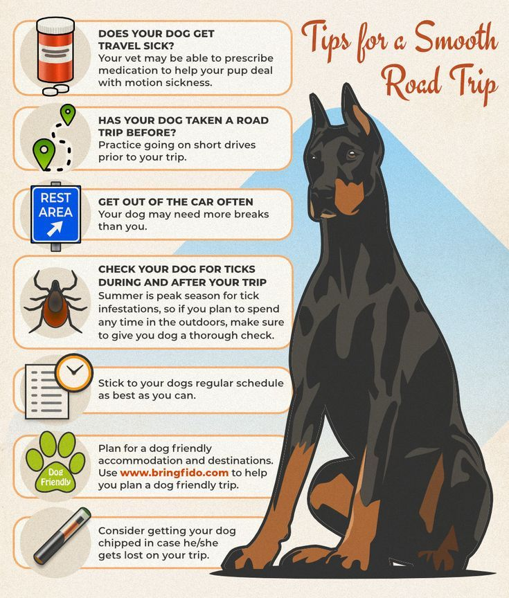The Complete Guide To Traveling With Dogs Road Trip With Dog