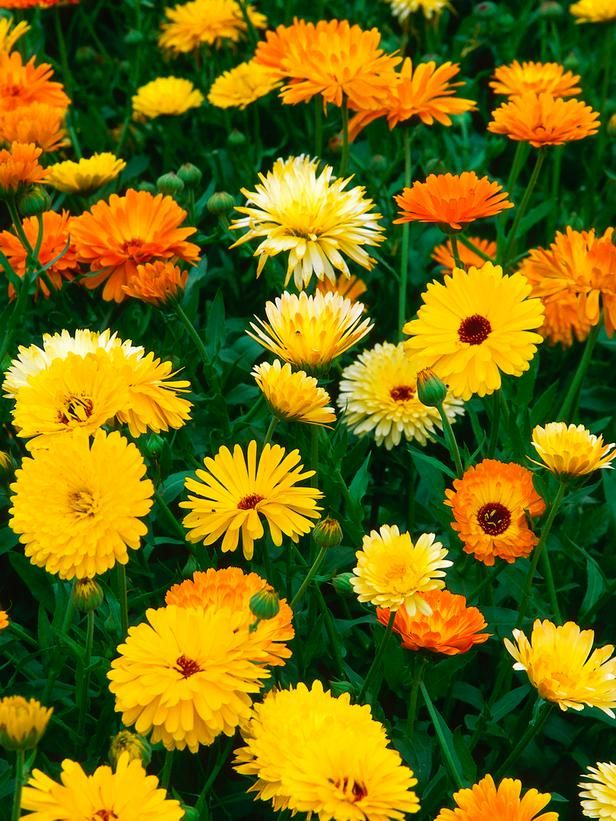 9 Foolproof seeds guaranteed to provide you with a garden full of bright, summer flowers.