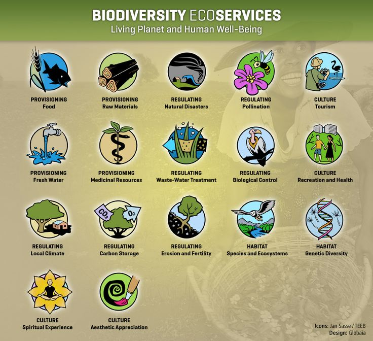 9 best ap environmental science images on pinterest food chains ecosystem in a ball cartoon sciox Choice Image