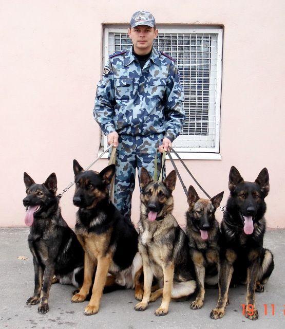 German Shepherd Dogs