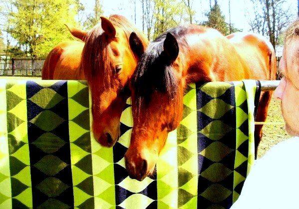 Koně jsou zvědaví