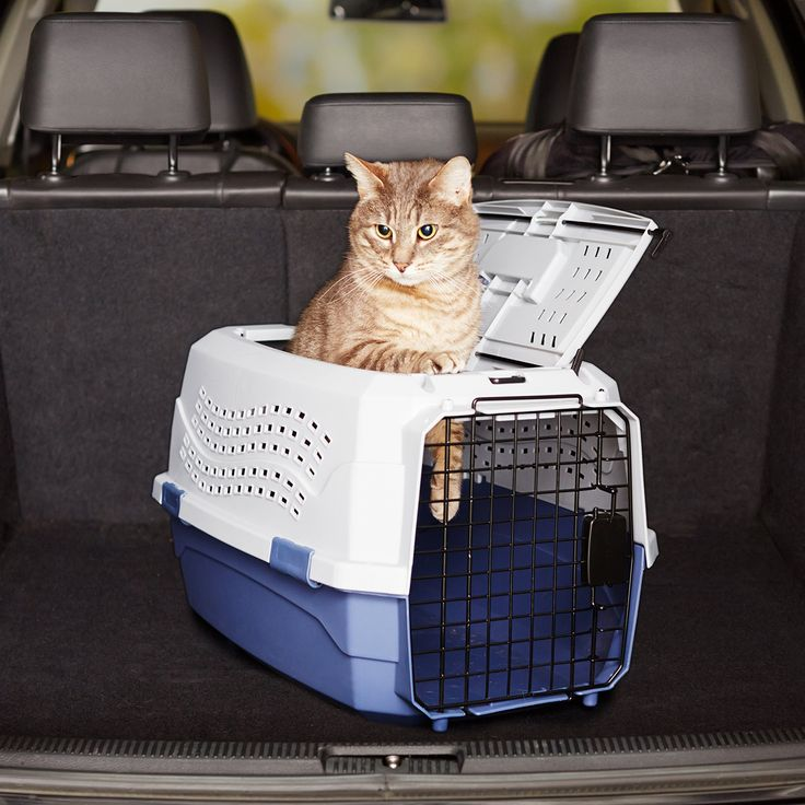 Amazonbasics 23inch Twodoor Topload Pet Kennel Inspect This Awesome Product By Mosting Likely To The Web Link At Cat Carrier Pet Travel Carrier Pet Kennels