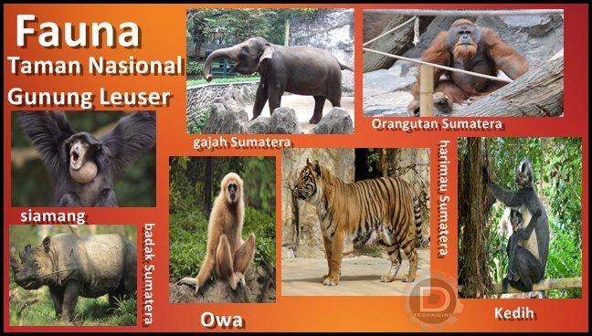 Kebun Binatang Adalah Pelestarian