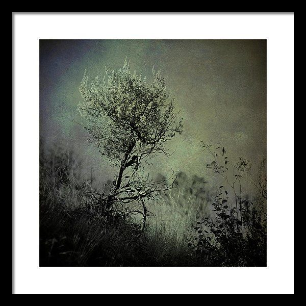Sage Framed Print featuring the digital art Sage by Tonya Doughty