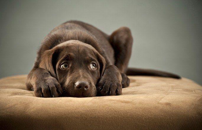 Bellen, winseln, jaulen, knurren - Hundesprache verstehen - Hunde kommunizieren nicht nur über ihre Körperhaltung, sondern auch über Geräusche. Dazu gehören unter anderem Bellen, Jaulen, Winseln und Knurren. Was ein Hund mit dem jeweiligen Laut sagen will...