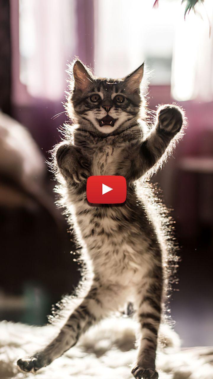 Dancing Kitten Gif Dancing Cat Wallpaper Dancing Cat Gif Cute Cat Wallpaper Aesthetic Dancing Cat Dancing Cat Gif Cute Cat Wallpaper