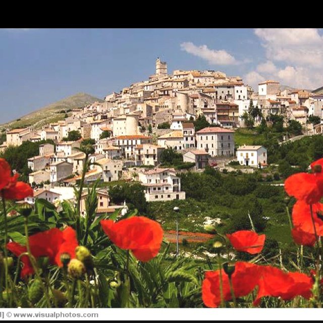 L'aquila with ever present poppies.