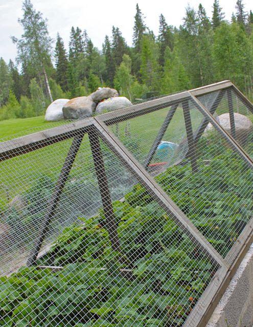 It's a house - en av Sveriges största inredningsbloggar: Trädgård