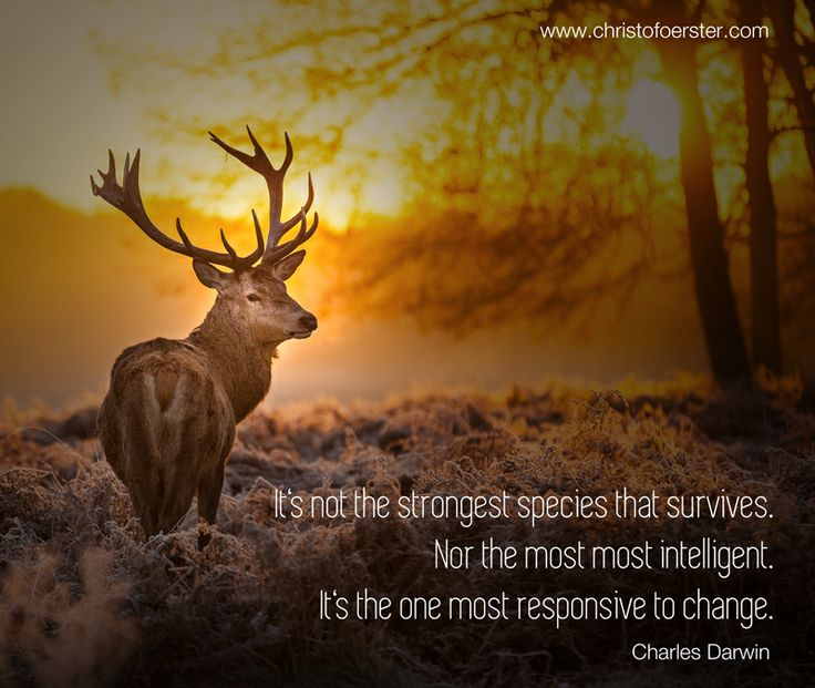 It's not the strongest species that survives. Nor the most intelligent. It's the one most responsive to change. Charles Darwin | survival of the fittest, change, motivation