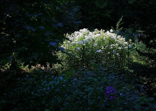 How To Plant A Moonlight Garden
