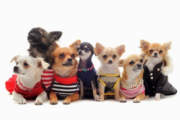 There are a large number of  online pet stores which are offering  pet supplies online at an affordable rates.