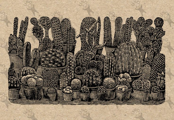 Vintage Image Variety of Cactus Instant Download picture Digital printable clipart graphic stickers, transfer, burlap, iron on etc HQ 300dpi by UnoPrint on Etsy