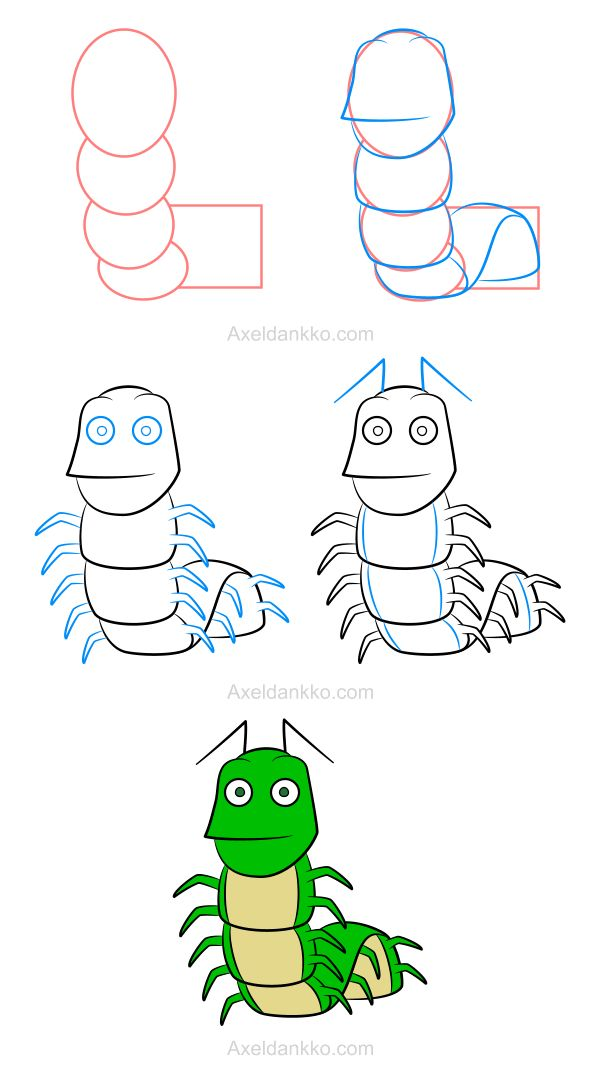 How to draw a caterpillar - Comment dessiner un mille-pattes