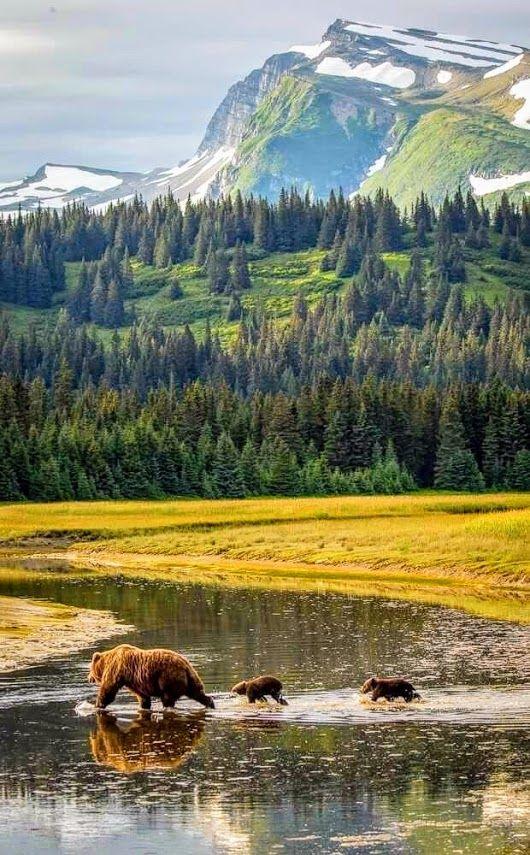 Yellowstone. Porque me pertenece todo animal silvestre del bosque, las bestias sobre mil montañas. (Salmo 50:10) SB